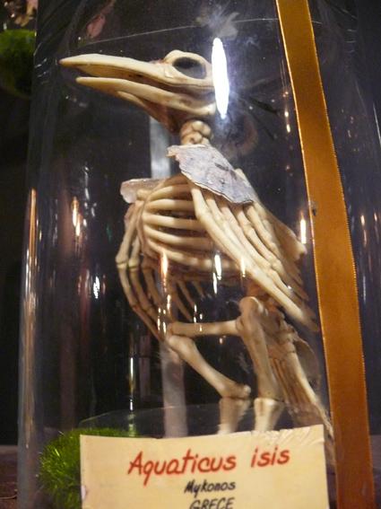 Cabinet d'anatomie