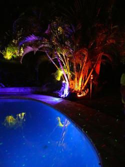 Eclairage des palmiers
