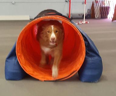 folly tunnel.jpg