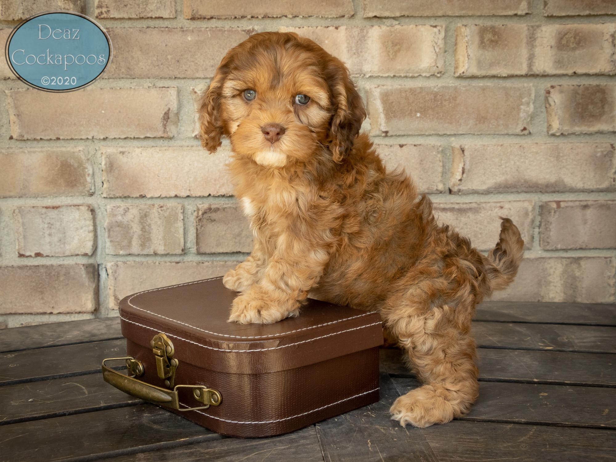 Puppy Pickup