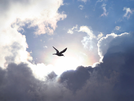 LESSONS FROM THE BIRDS OF THE AIR