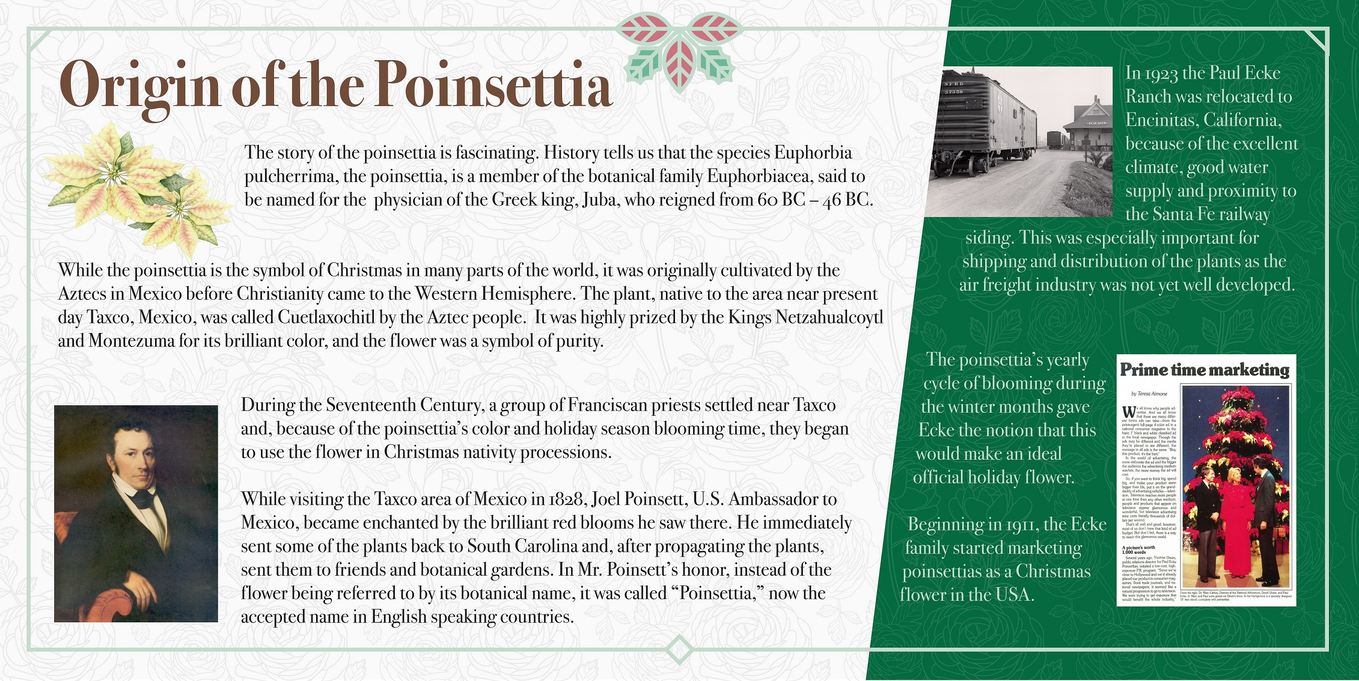Origin of the Poinsettia2