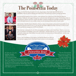 The Poinsettia Today