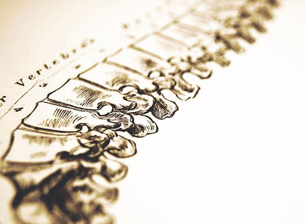 spine_edited.jpg