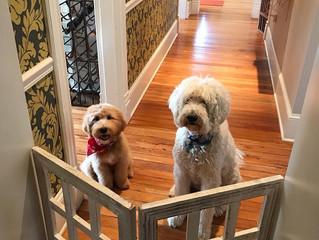puppy gate :)