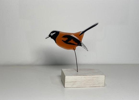 Turpial Bird