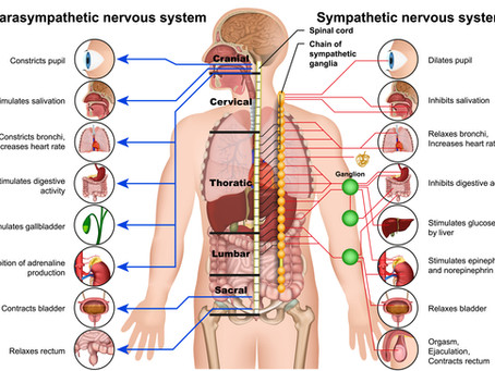 Know Your Nervous System
