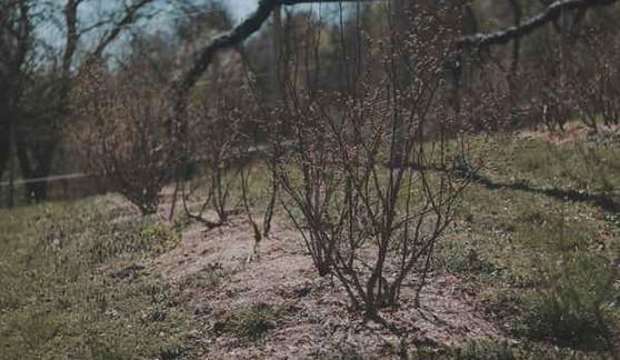 Cucoriedkova-farma.jpg