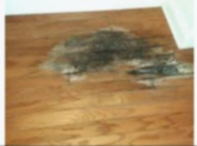 damaged wood flooring.JPG