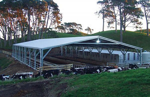 CroppedImage700450-Dairy-Shed-Cover.jpg