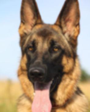 #dog #dogs #dogsofinstagram.jpg