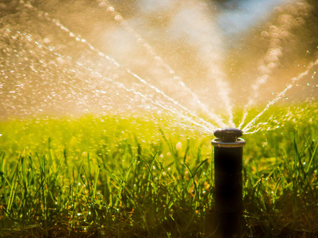 How Often Should I Water My Lawn in the Summer?