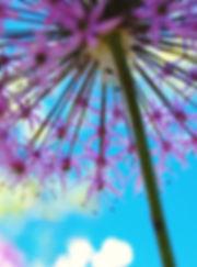 colorfulnature-17.jpg