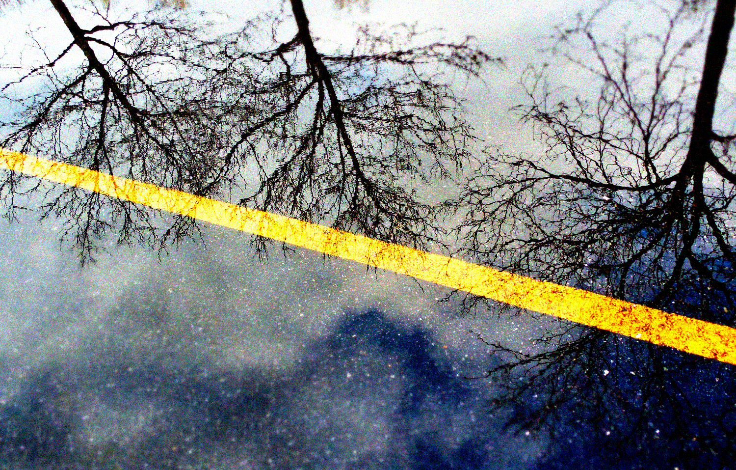Three trees and a yellow line