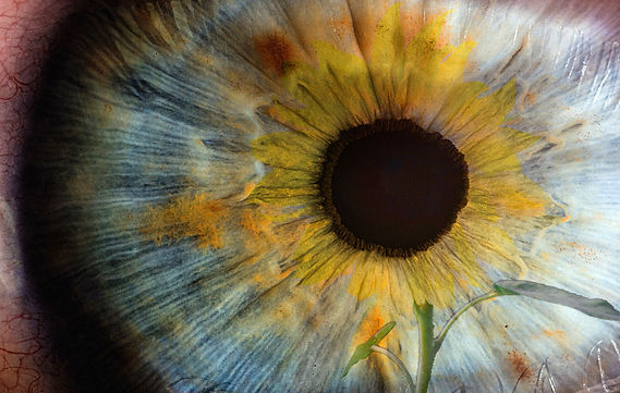 Sun flower Eye copia.jpg
