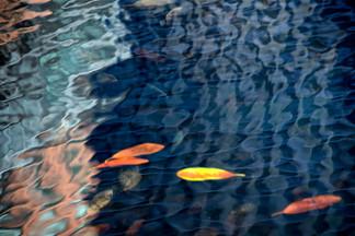 urban pond