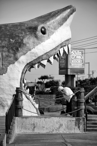 jaws on the strip