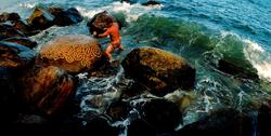 """Montauk, NY """"Drifted Coral"""" - 2004"""