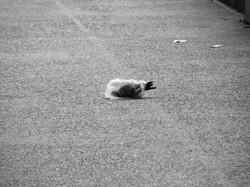 pidgeon's plastic dance 024