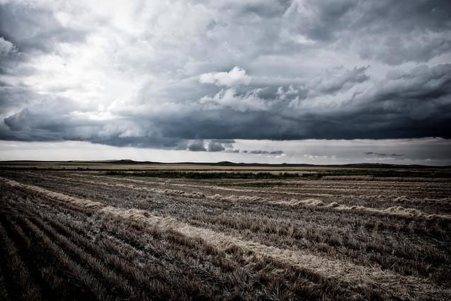 field in eastern washington