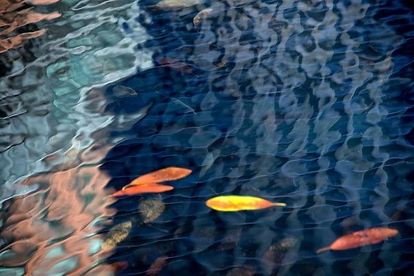urban pond.jpg