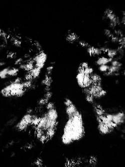 A tree's shadow