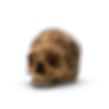 Skull Dirty.png
