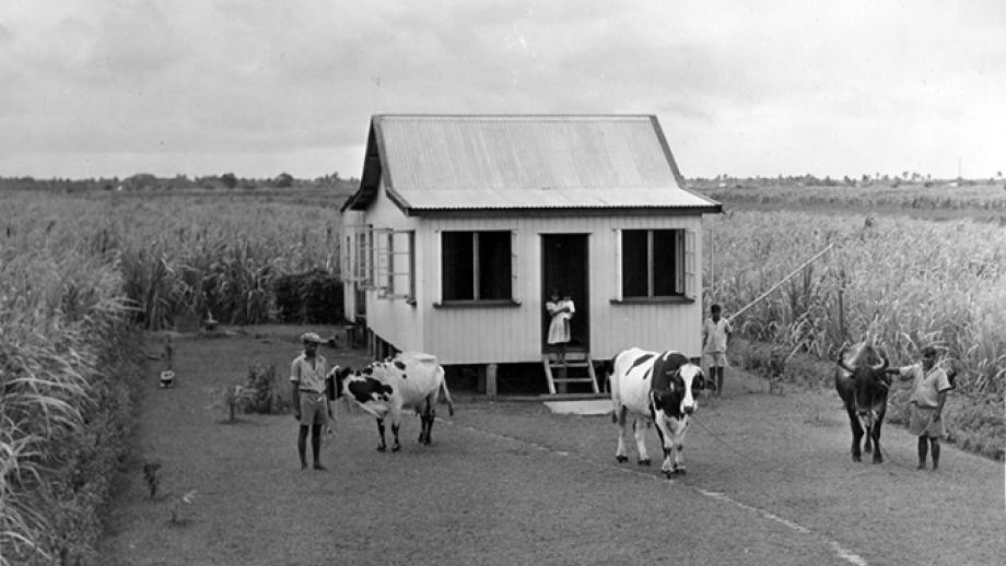 Cane-farming smallholders in Fiji
