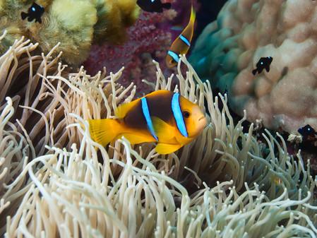 Fiji: your paradise vacation