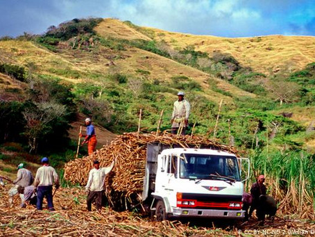 Sweet and sour: Fiji's sugar story