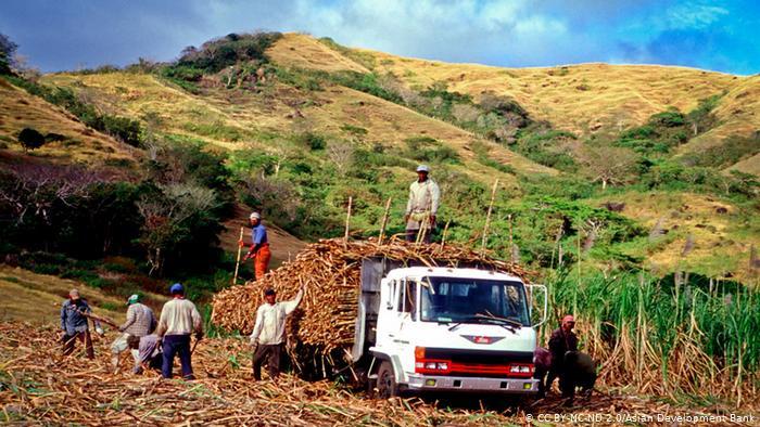 Fiji sugar cane harvest