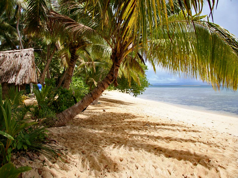 coconut palms shade a beach