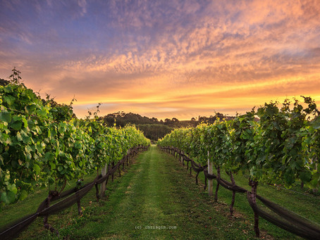 Wine Lover's Dream Job