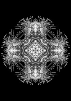 Amy Stevens Nature's Hidden Patterns £250