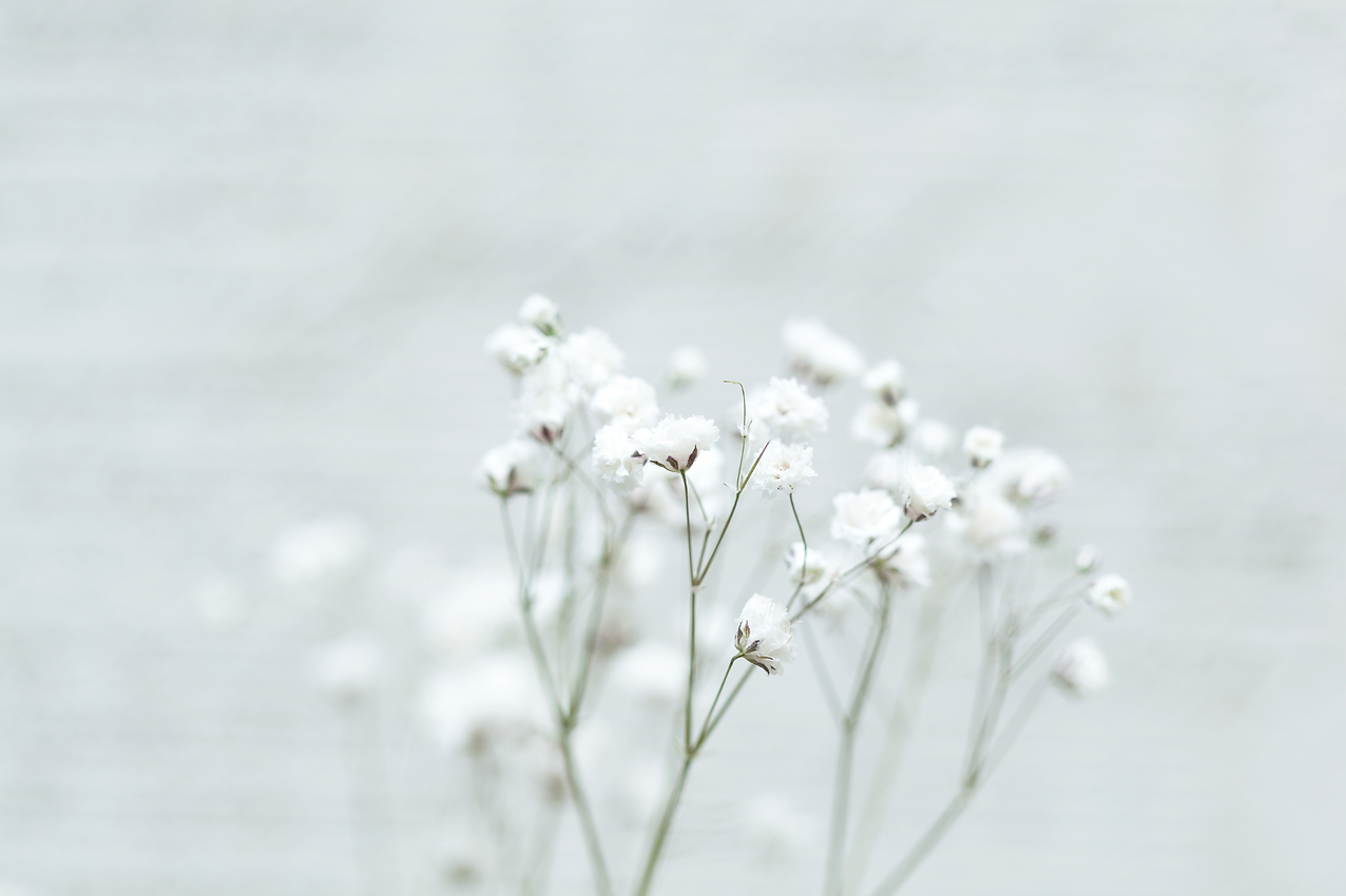backdrop flower2.png