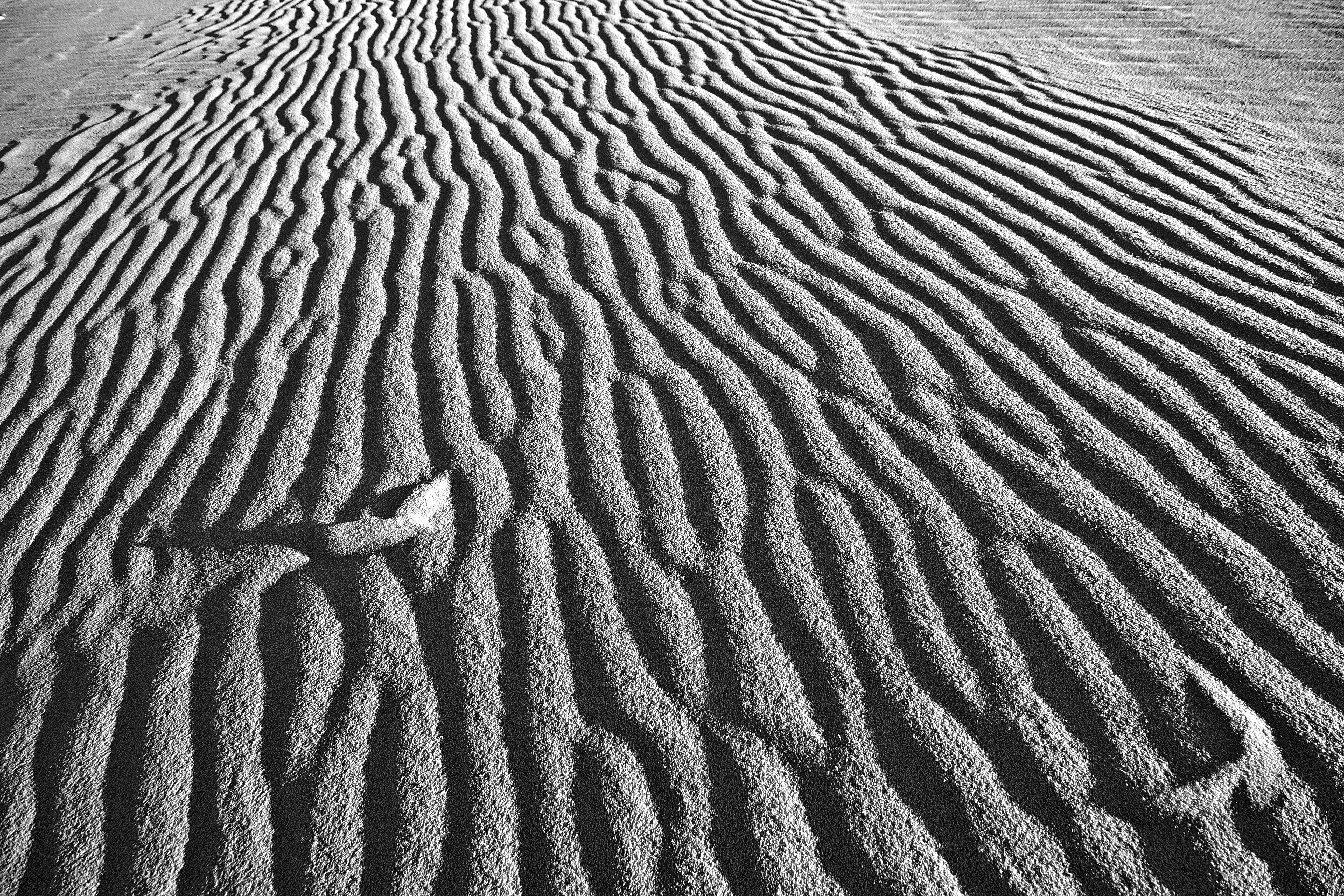 White Sands Grain