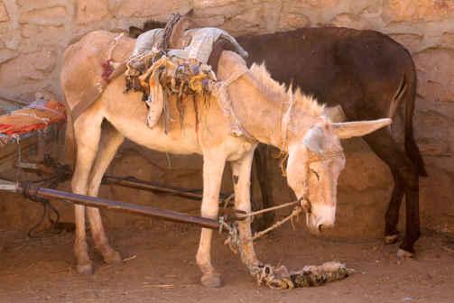 Donkey on Hold