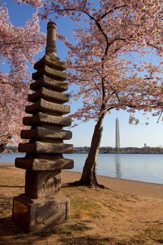 Blossoms over Pagoda