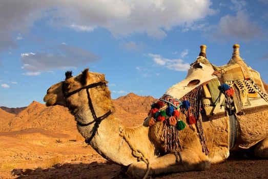 Camel Wanderlust