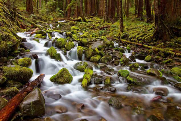 Mossy Trickle