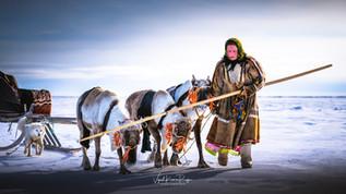 Winter Migration,Nenets