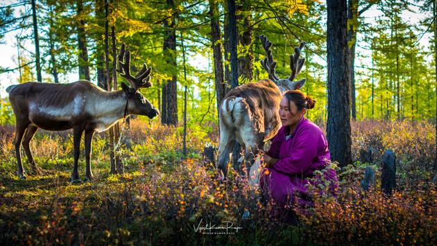 Milking the Reindeer