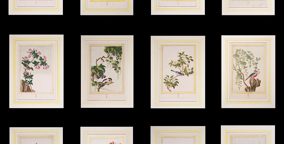 Twelve 18th Century Botanical Engravings, P.J. Buchoz