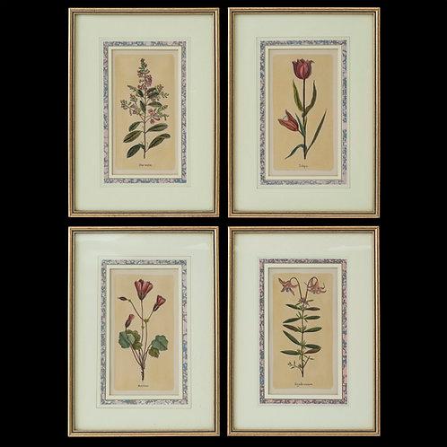 Four Antique Botanical Prints after Jacques de Sève