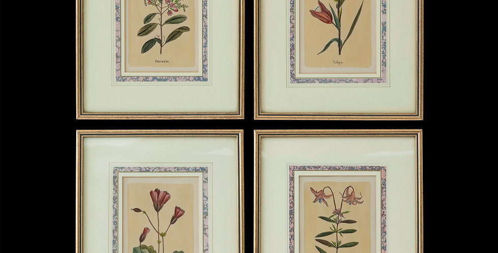 Four Antique Botanical Prints after Jacques de Sève