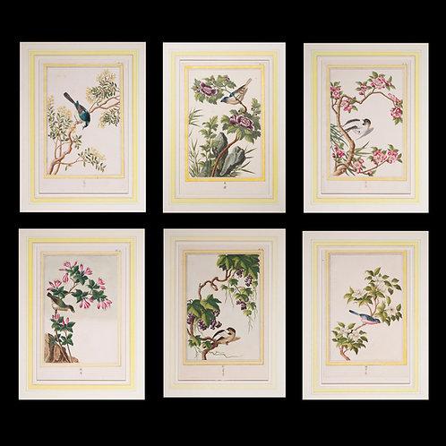 Six 18th Century Botanical Engravings, P.J. Buchoz