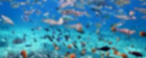 snorkeling tour nusa penida.jpg