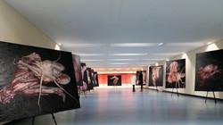TORSO Exhibition in London