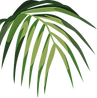 Foglia tropicale