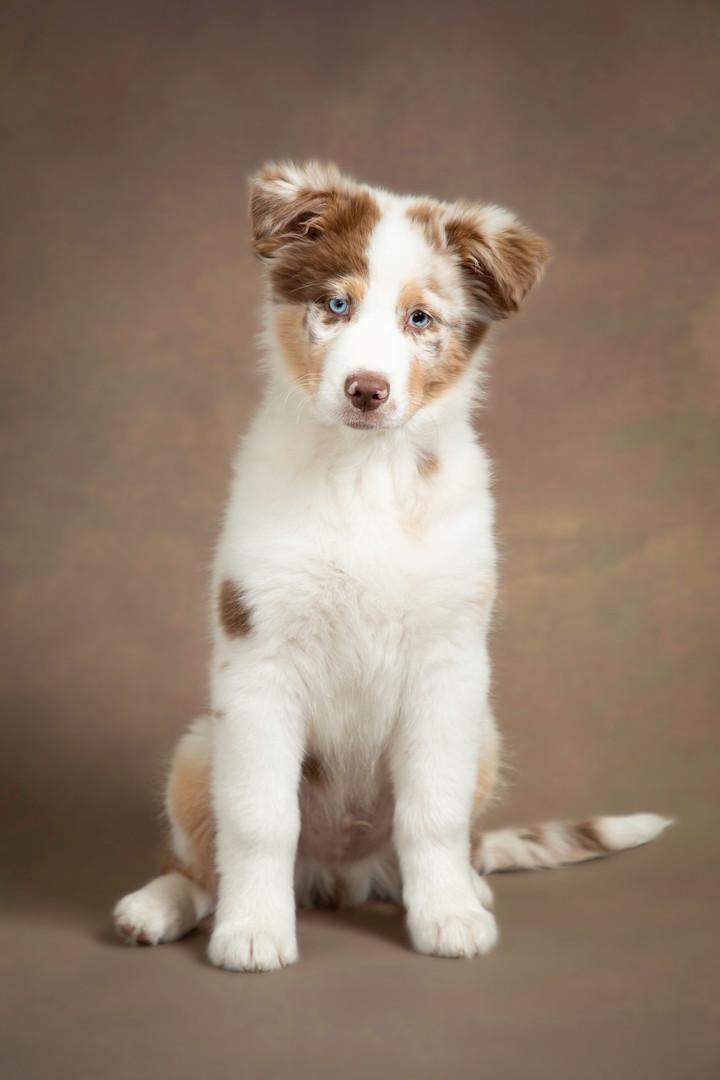 Hundefotos.jpg